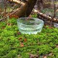 Narnia Sphagnum Moss