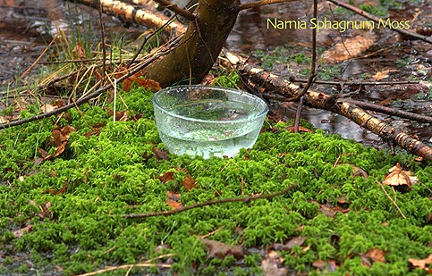 narniasphagnummoss-bowl
